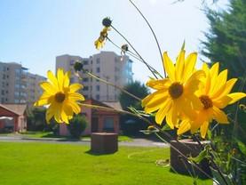 Hotelera Vegasur, La Serena